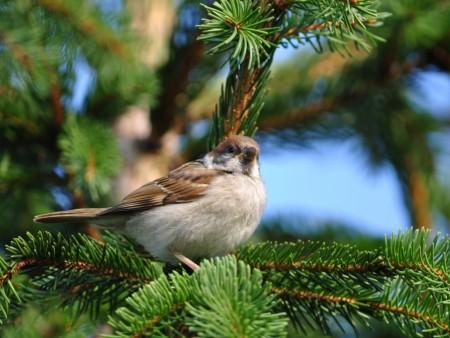 صور طيور HD (1)