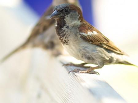 صور طيور HD (3)