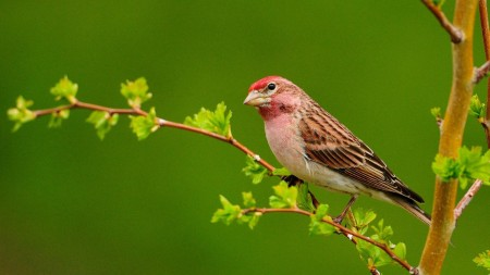 صور طيور HD (4)