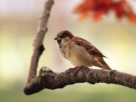 صور عصافير طيور (2)