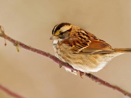صور عصافير طيور (5)