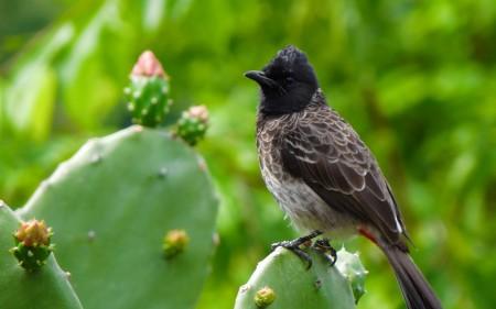 صور عصافير كناري (3)