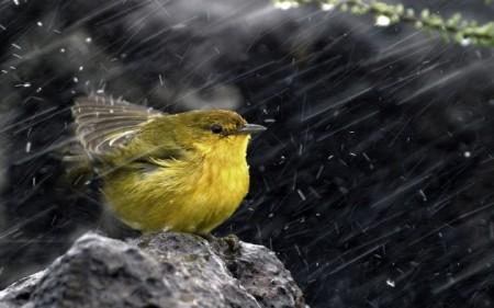 صور عصافير (2)