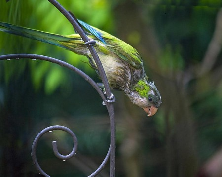 صور عصافير (3)