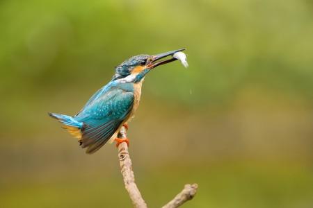 صور عصافير (4)