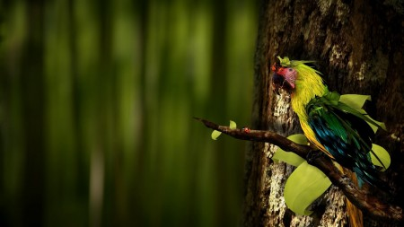 صور عصافير HD (2)
