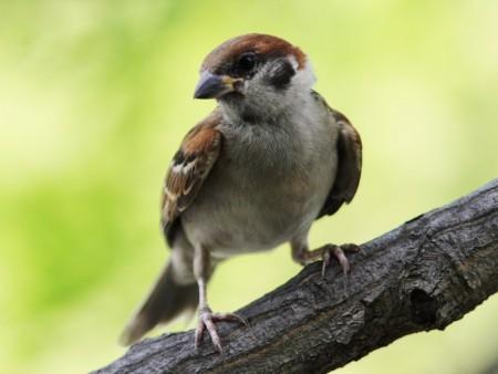 طيور بالصور بجودة HD (4)