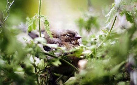 طيور بالصور بجودة HD (6)