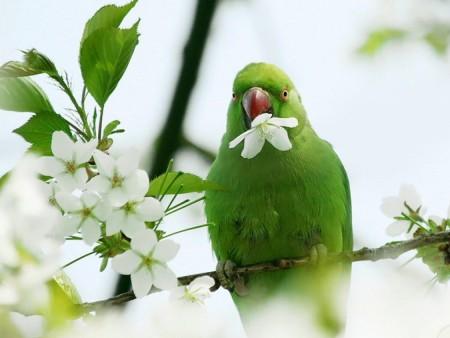 طيور بالصور (2)