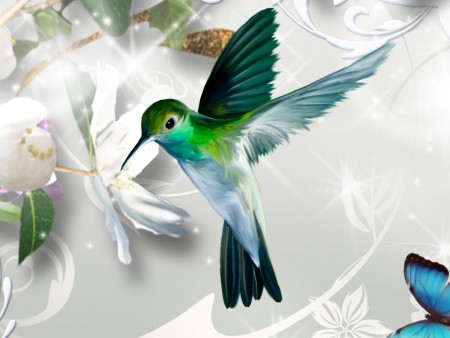 طيور جميلة (2)