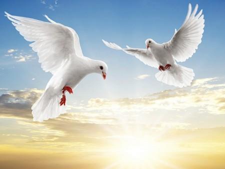 طيور جميلة (3)