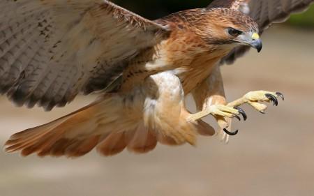 طيور حب (2)