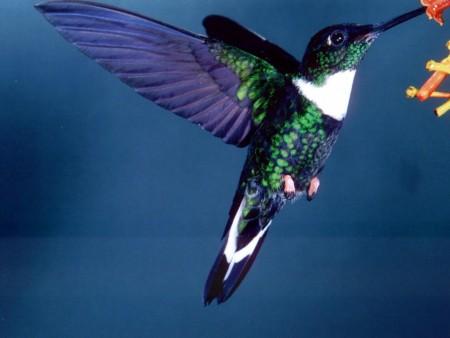 طيور غريبة (1)