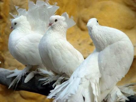 طيور مختلفة (1)