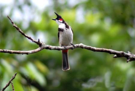 طيور مميزة (1)