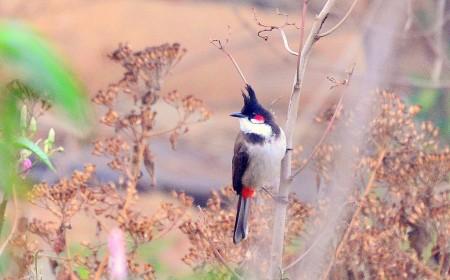 طيور مميزة (2)