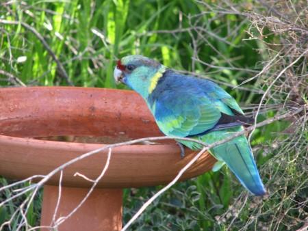 طيور مميزة (3)