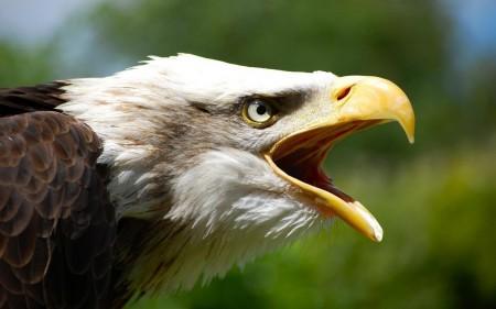 طيور منوعة (1)
