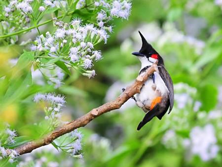 طيور نادرة (1)