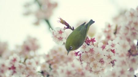 طيور (1)