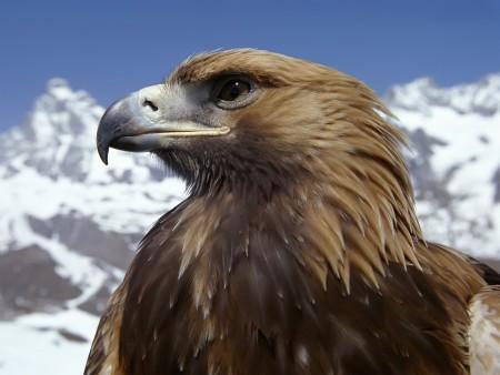 طيور hd (1)