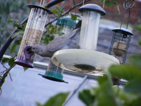 طيور hd (2)