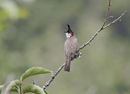 طيور hd (3)