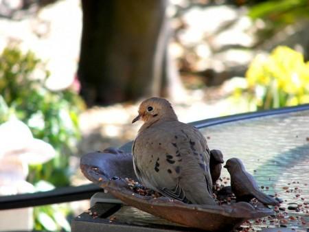 عالم طيور (1)