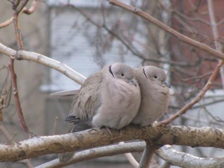 عالم طيور (2)