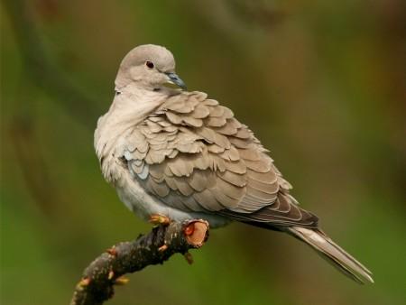 عالم طيور (3)