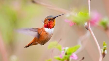 عصافير الجنة (1)