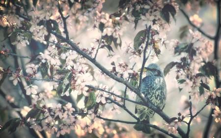 عصافير الجنة (2)