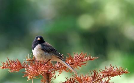 عصافير الجنة (3)