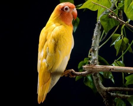 عصافير الحب بالصور (1)