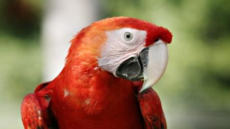 عصافير الحب بالصور (2)