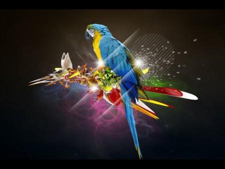 عصافير الحب بالصور (3)