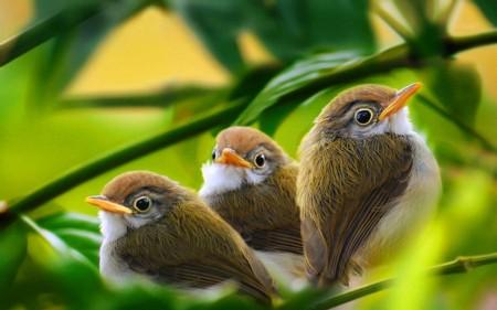 عصافير الحب (3)