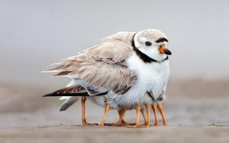 عصافير الحب (4)