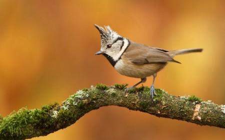 عصافير الكنارى (3)