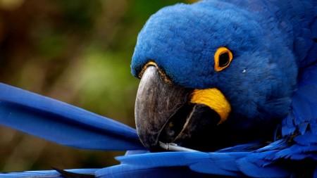 عصافير الكوكتيل (2)