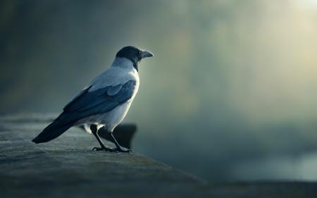 عصافير النيل (2)