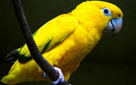 عصافير جميلة جدا (1)