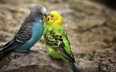 عصافير جميلة جدا (2)