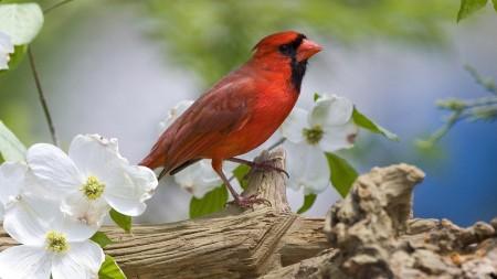 عصافير جميلة جدا (4)