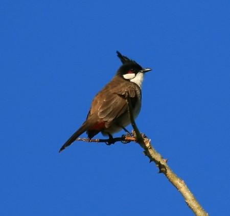 عصافير جميلة (1)