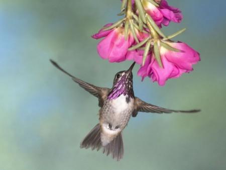 عصافير ملونة (1)