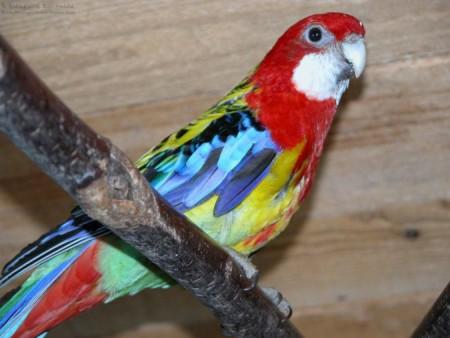 عصافير ملونة (2)