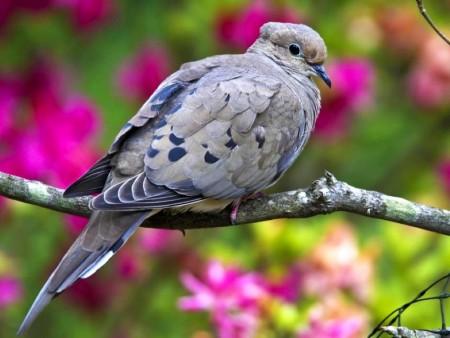 عصافير ملونة (4)
