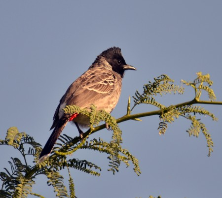 عصافير ملونة (5)