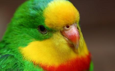 عصافير HD (5)